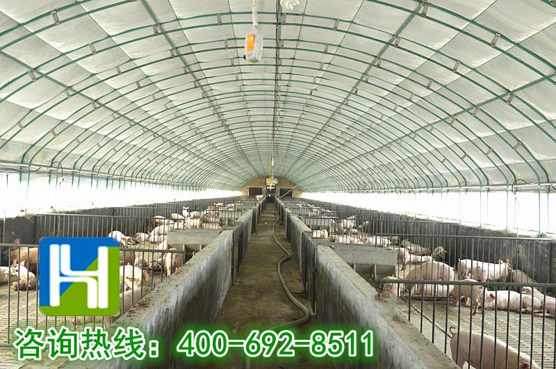 猪场大棚钢结构图