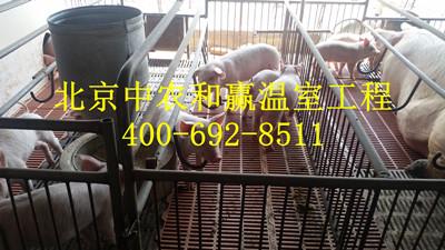 黑龙江冬暖夏凉养殖大棚养殖大棚,养殖大棚,智能控温养猪棚,