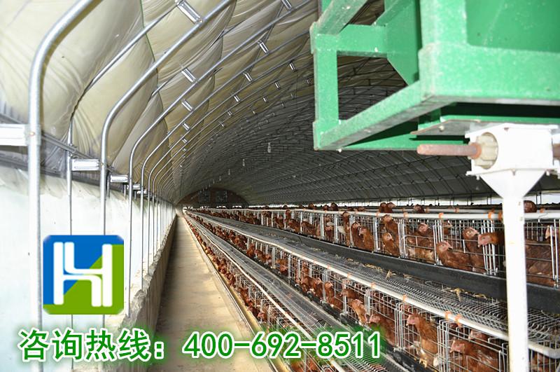 养殖大棚:养鸡大棚