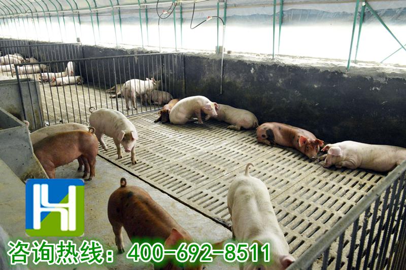 养殖大棚:养猪大棚